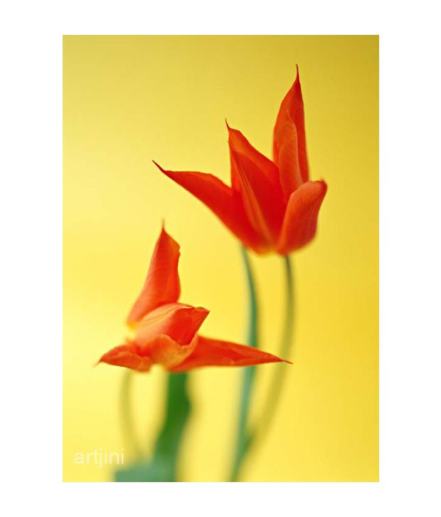 Artjini Blooming Red Tulip Painting