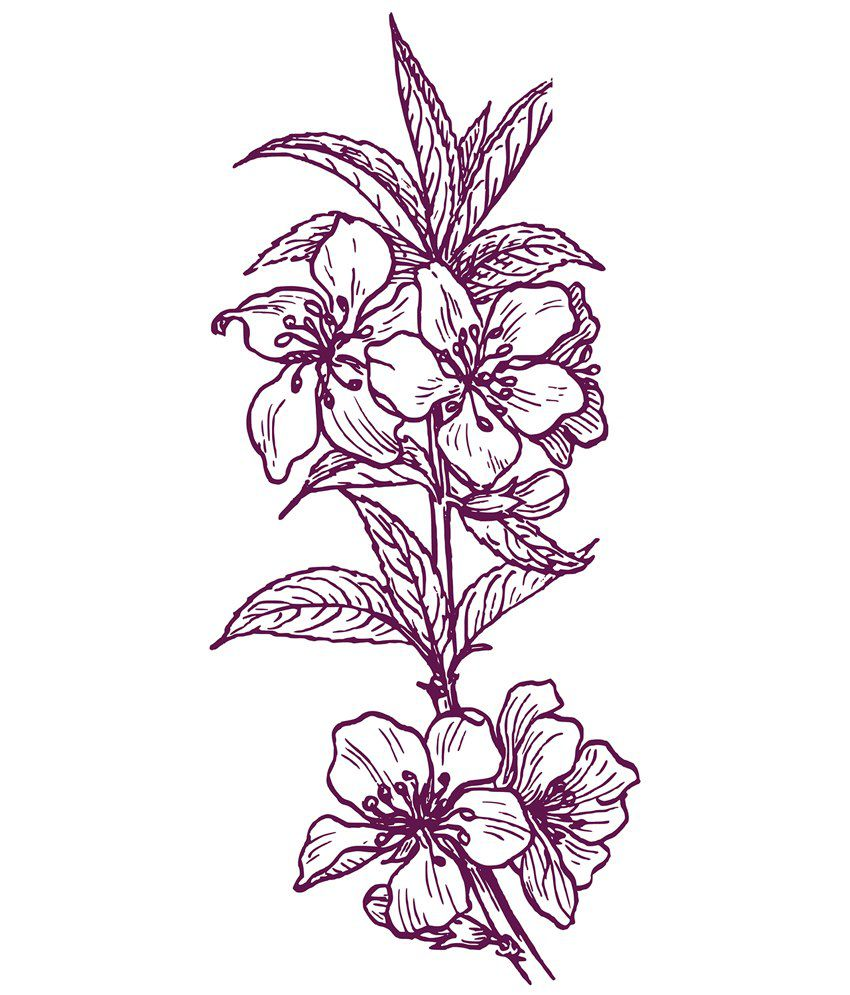 Shopisky beautiful flowers sketch in pink color wall sticker buy shopisky beautiful flowers sketch in pink color wall sticker izmirmasajfo
