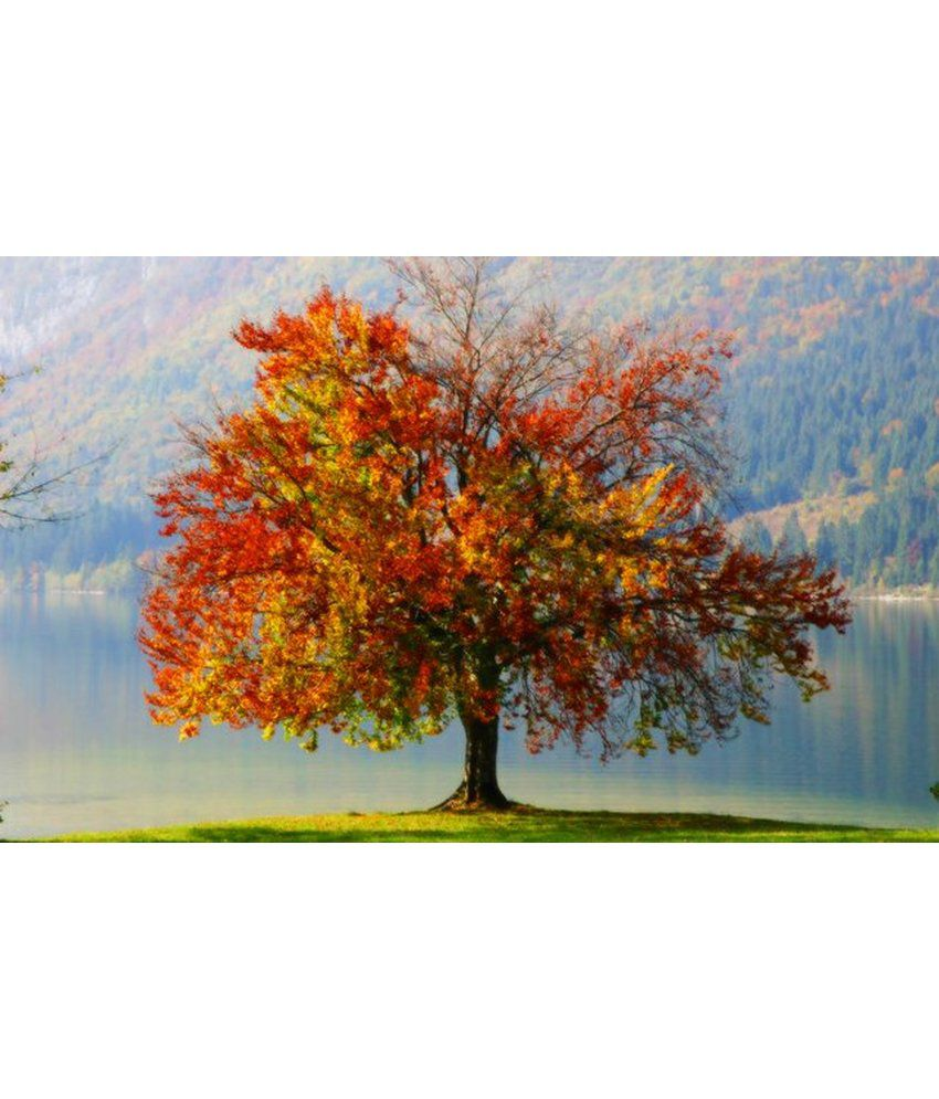Wonder Images Pvt. Ltd. Tree At Cliff Canvas Art