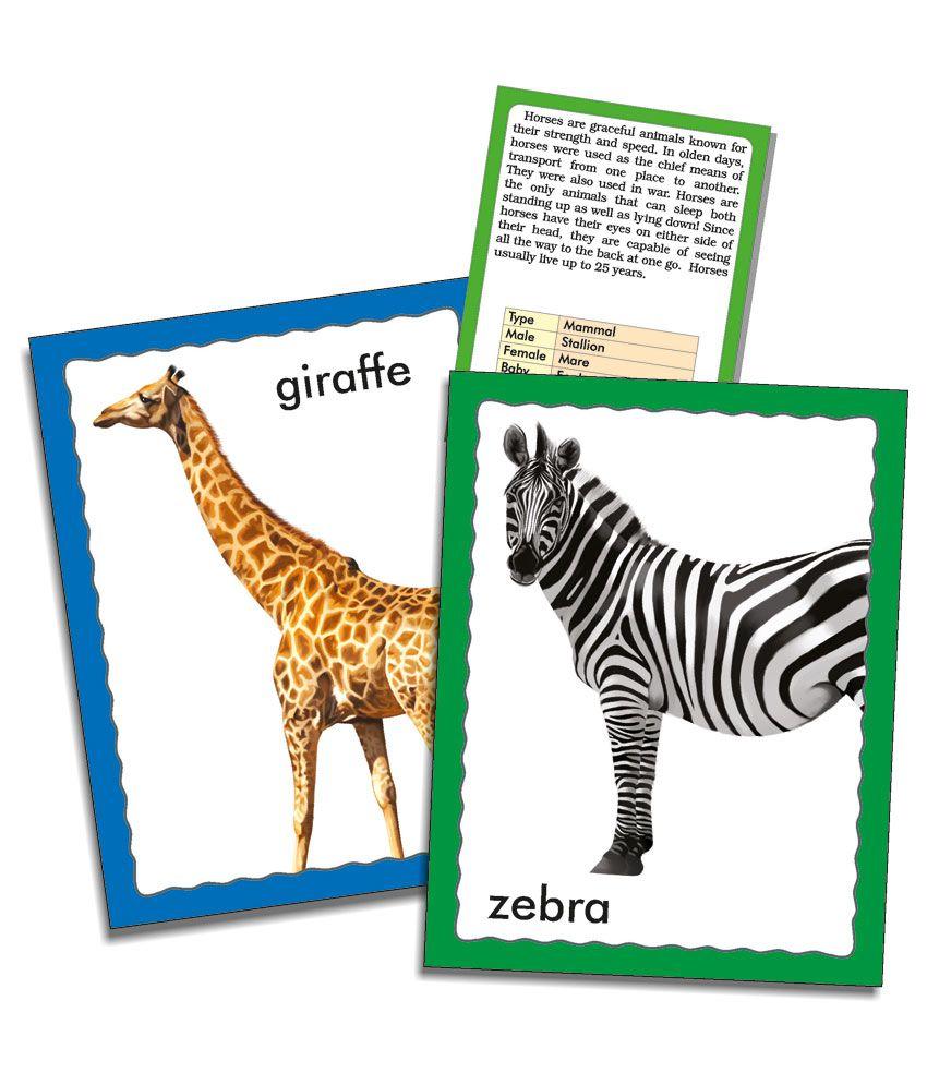 Creatives Discover Animals (36 Jumbo Flash Cards) Flash Cards