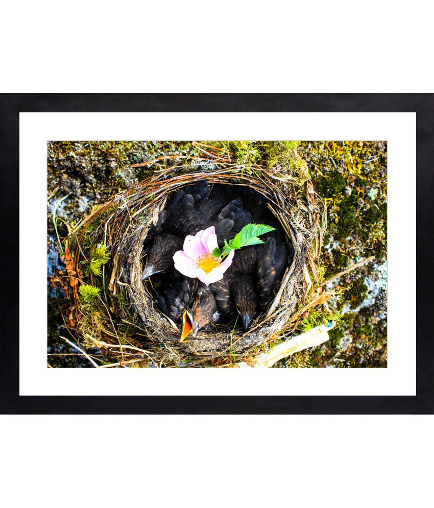 Craftsfest Birds in nest Canvas Painting With Frame Single Piece