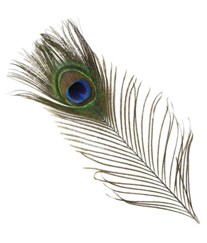 peacock natural mor pankh feather set 1 buy peacock natural mor