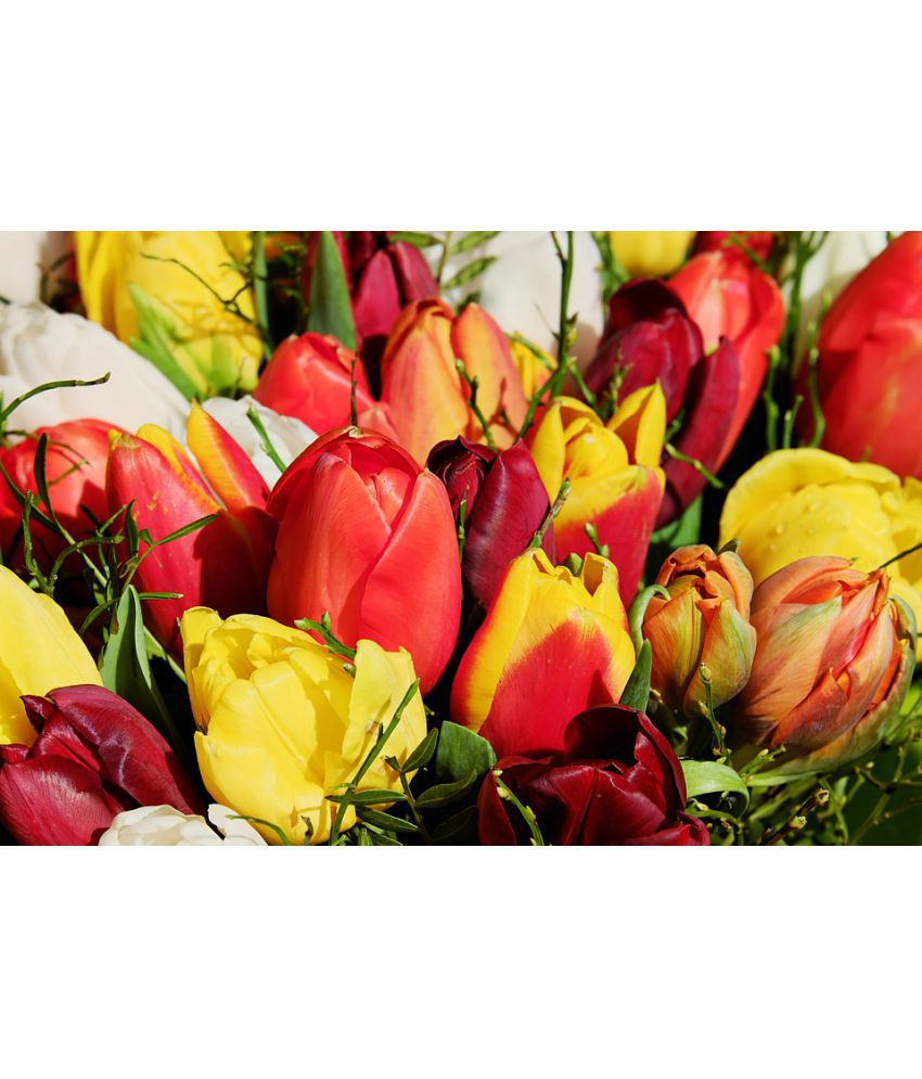 Avikalp Bouquet Tulip Shrub Tulips Plant Flower Paper Wall Poster Without Frame
