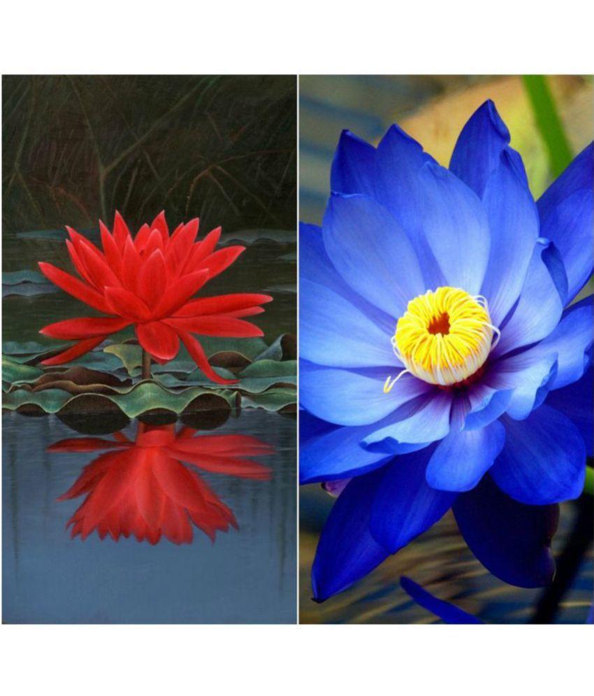 Creative farmer flower seeds lotus flower seeds red blue colors creative farmer flower seeds lotus flower seeds red blue colors seeds for kitchen gardening izmirmasajfo
