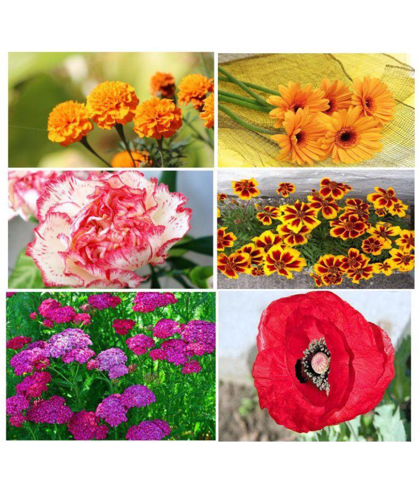 Flower seeds combo african marigold calendula carnation french flower seeds combo african marigold calendula carnation french marigold verbena poppy mightylinksfo