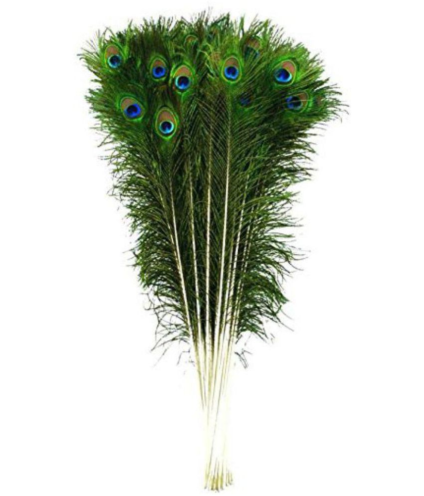 3dd2d1ec1 100% Original Mor Pankh 25 Pcs / Morpankh / Natural Peacock Feathers /  Natural Beautiful Peacock Eye Feathers Tails (Set of 25 Pieces) FULL SIZE  (30-35 ...