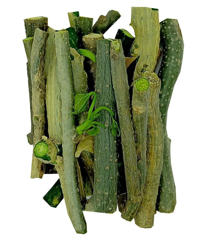 Giloy/Guchcha/Guduchi /Amrta/ गुडूची/300 gm/GiloySabut/Geeloh/TinosporaCordifolia NeemGiloy/Plant/ Stems 35