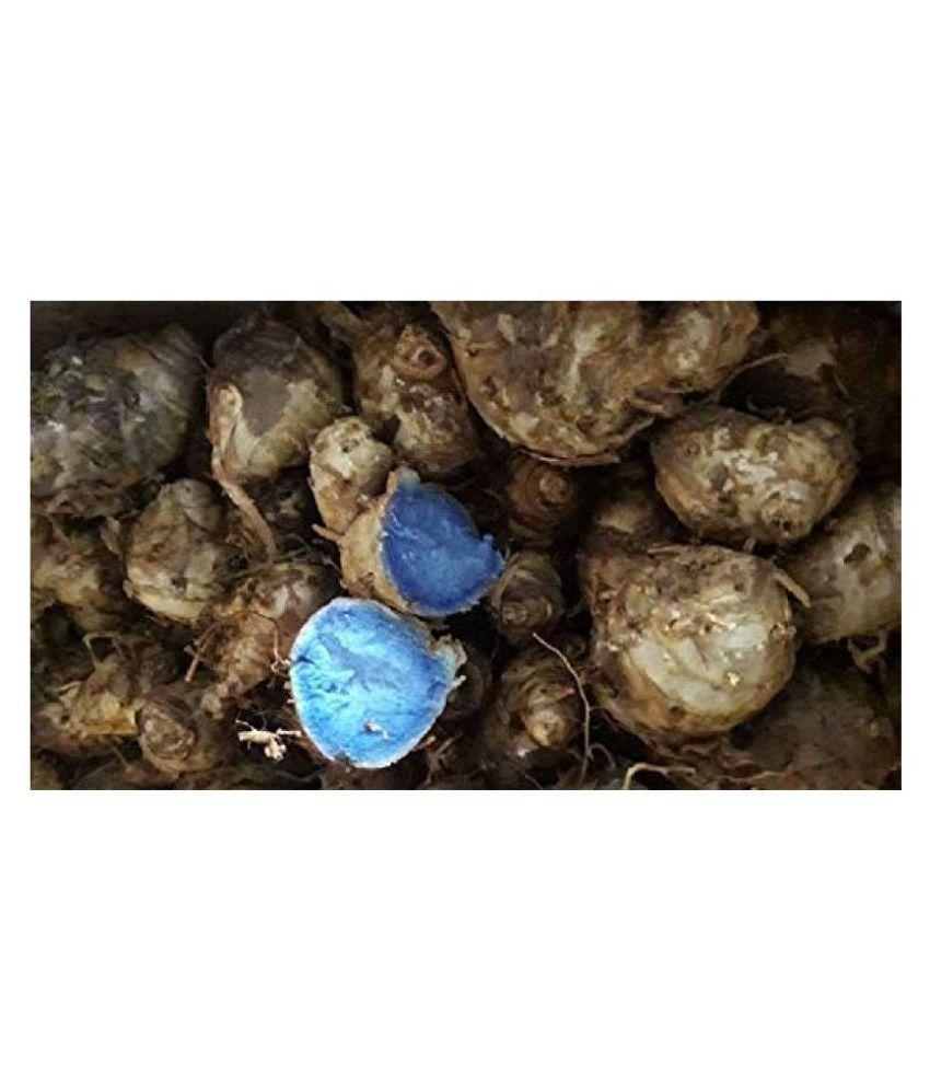 Xetomos Kali Haldi Rihisome 5piece Raw Herbs 100 gm