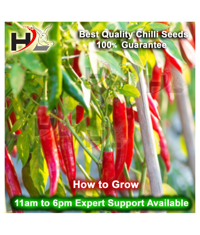 HL High/Best Quality CHILLI Seed's (100% Working), Chili Seed