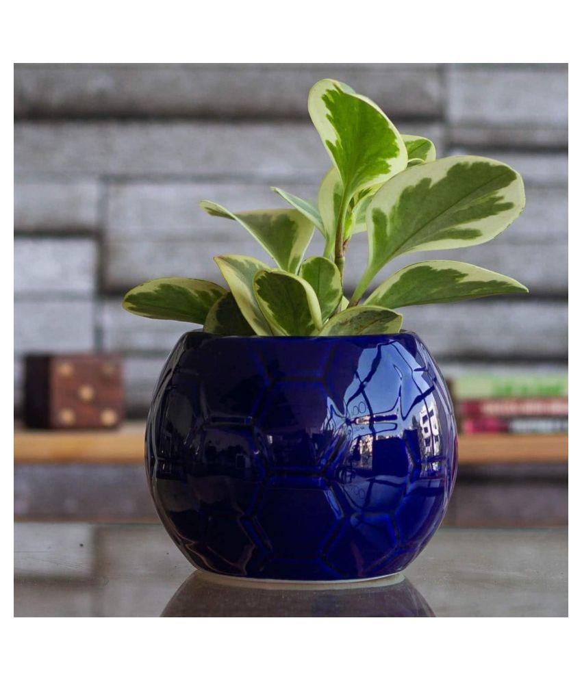 Ugaoo Football Ceramic Pot, Blue